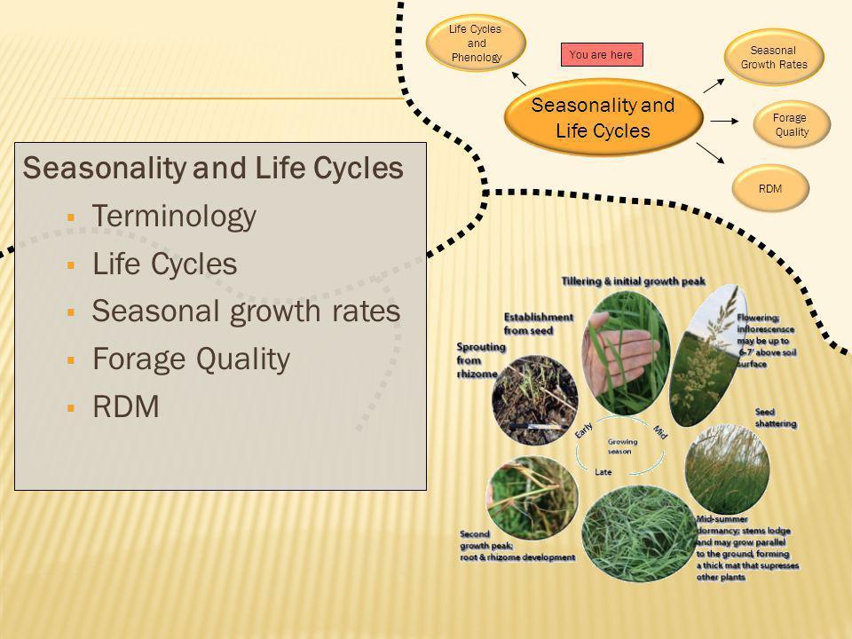 Seasonality and Life Cycles Terminology Life Cycles