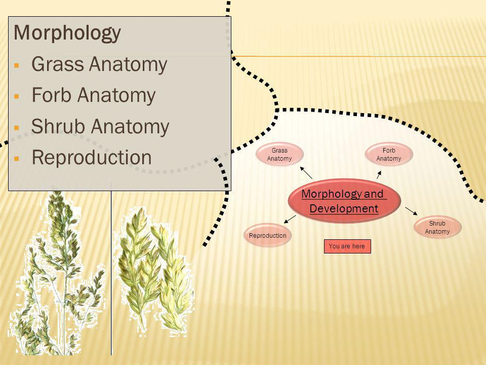 Morphology Grass Anatomy Forb Anatomy Shrub Anatomy Reproduction