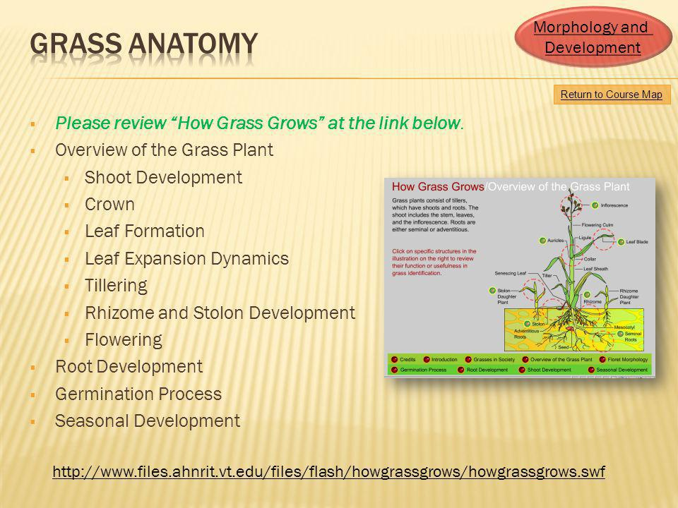 Grass Anatomy Please review How Grass Grows at the link below.