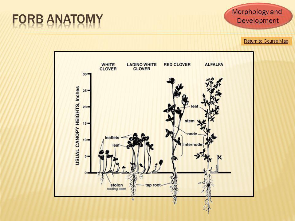 Forb anatomy Morphology and Development