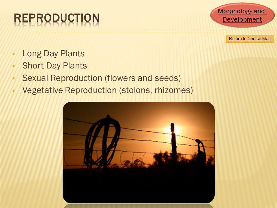 Reproduction Long Day Plants Short Day Plants