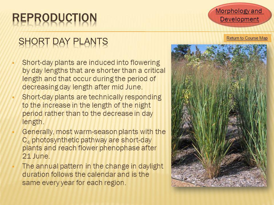 Morphology and Development. Reproduction. short Day Plants. Return to Course Map.