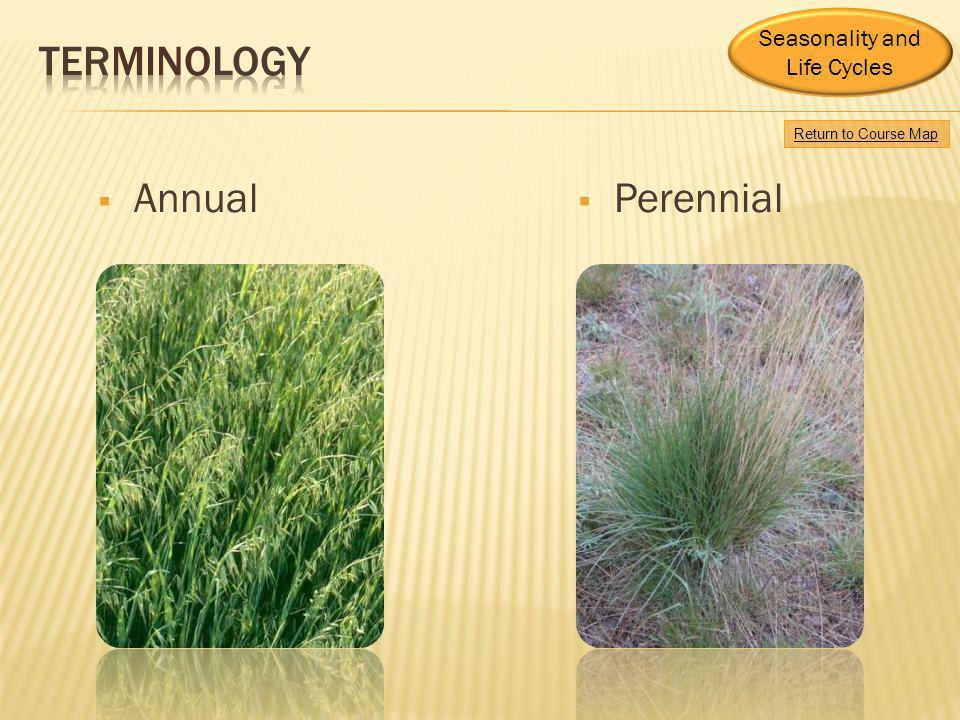 Terminology Annual Perennial Seasonality and Life Cycles