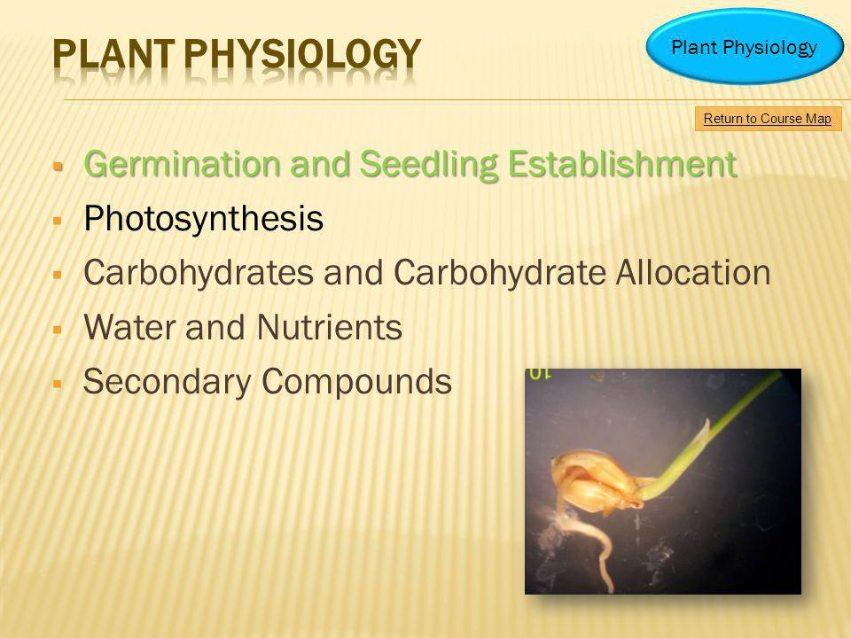 Plant physiology Germination and Seedling Establishment Photosynthesis