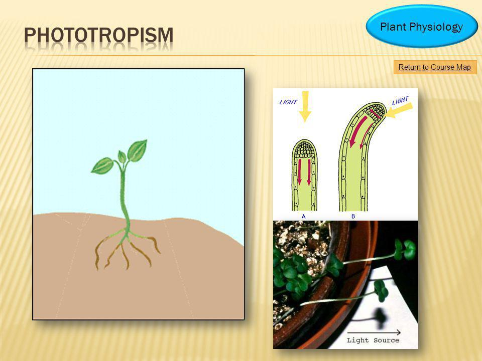 Phototropism Plant Physiology