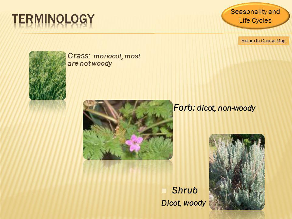 Terminology Forb: dicot, non-woody Shrub