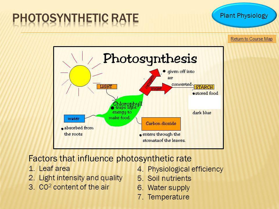 Photosynthetic rate Factors that influence photosynthetic rate