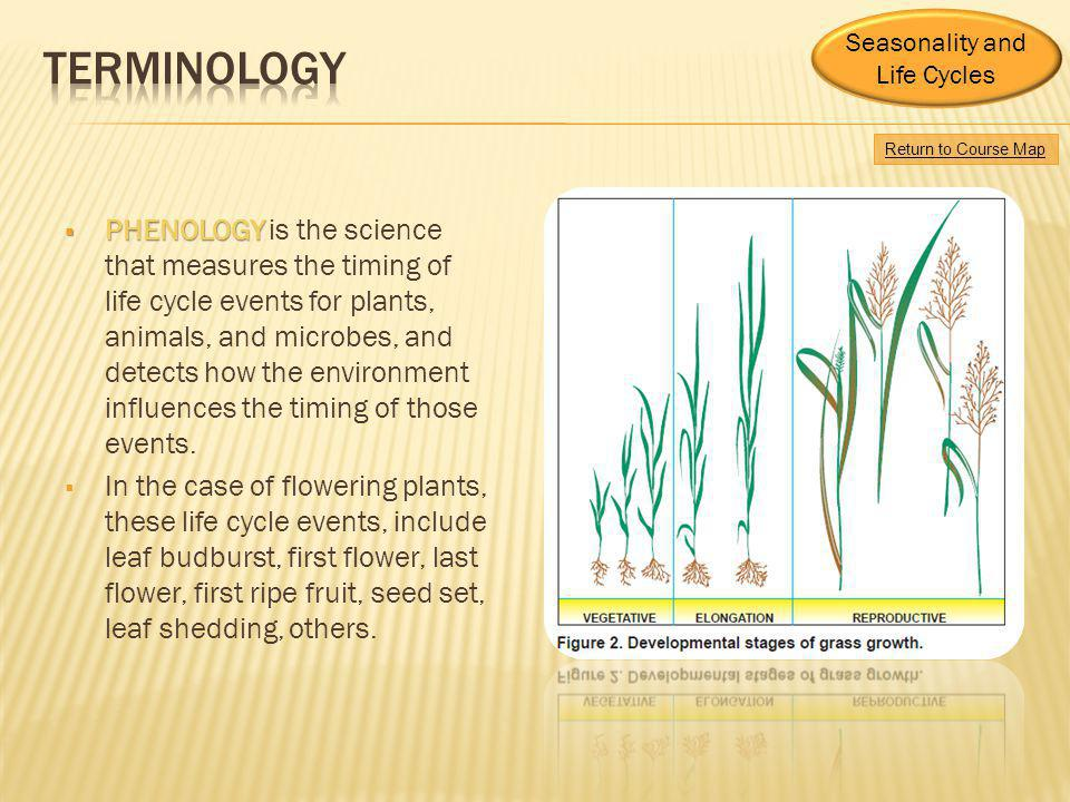 Seasonality and Life Cycles. Terminology. Return to Course Map.