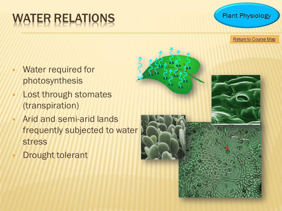 Water relations Water required for photosynthesis
