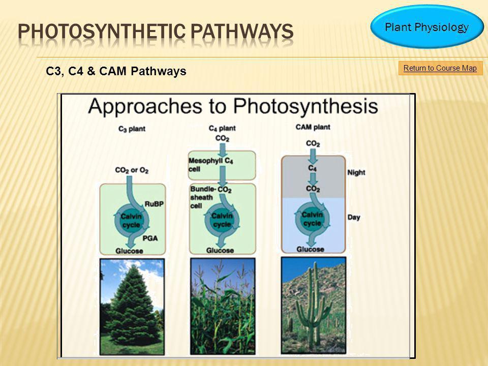 PHOTOSYNTHETIC PATHWAYS