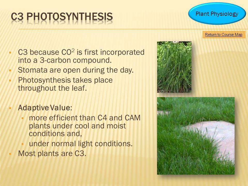 Plant Physiology C3 photosynthesis. Return to Course Map. C3 because CO2 is first incorporated into a 3-carbon compound.
