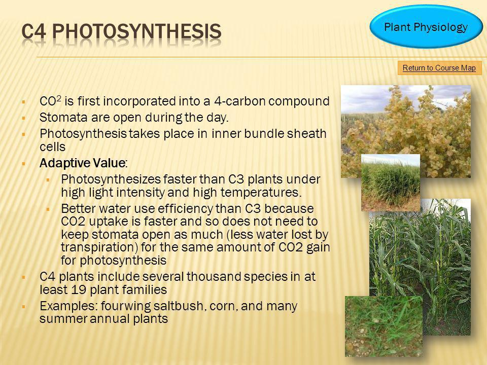 C4 photosynthesis CO2 is first incorporated into a 4-carbon compound