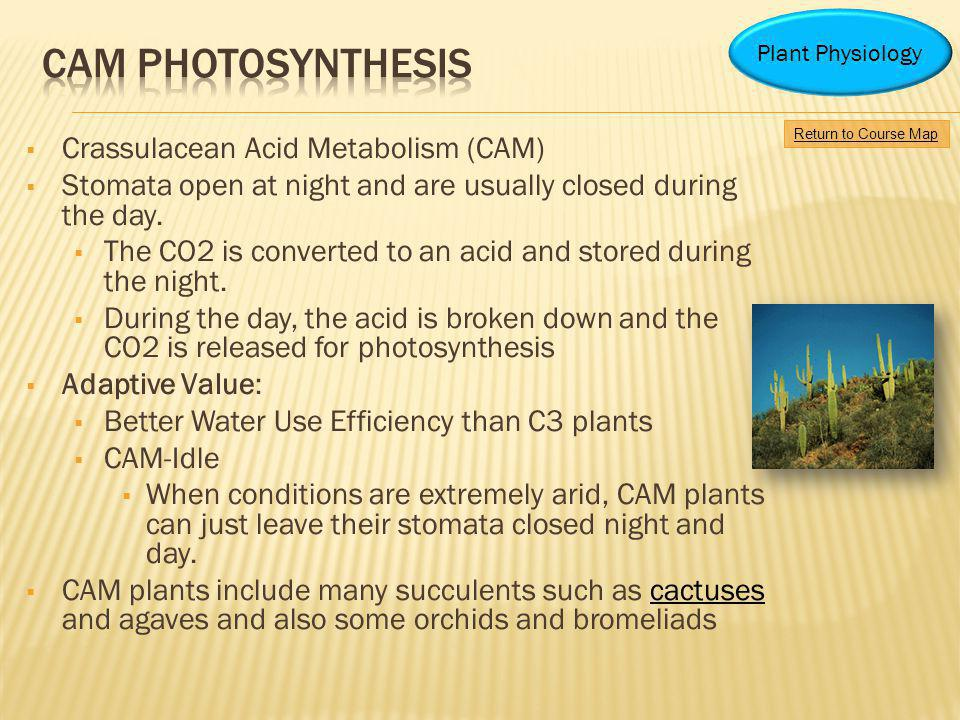 Cam photosynthesis Crassulacean Acid Metabolism (CAM)
