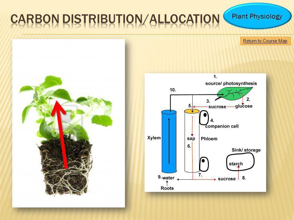 Carbon distribution/allocation