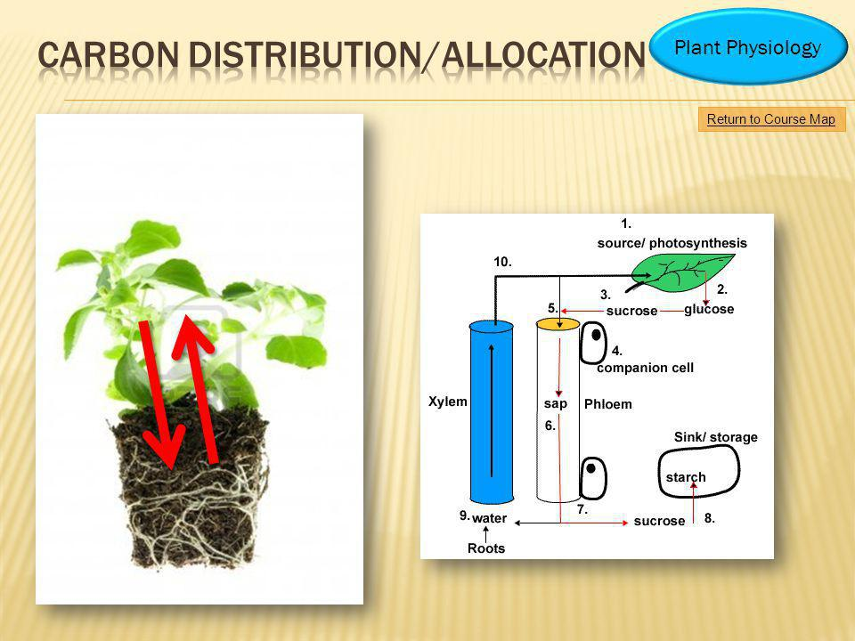 Carbon distribution/allocation