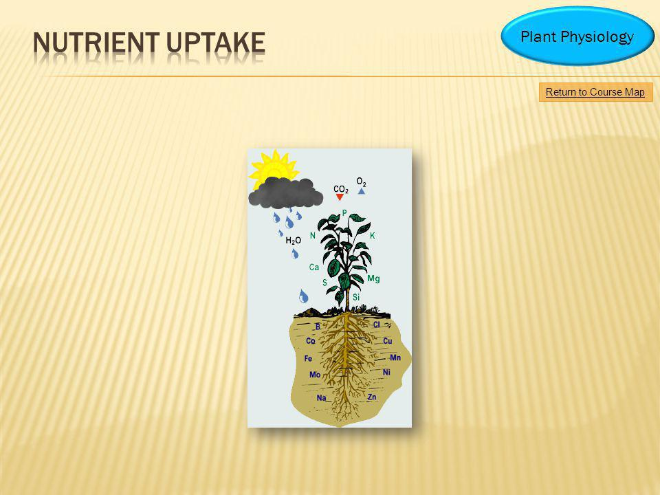 Nutrient uptake Plant Physiology