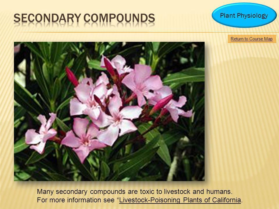 Secondary Compounds Plant Physiology