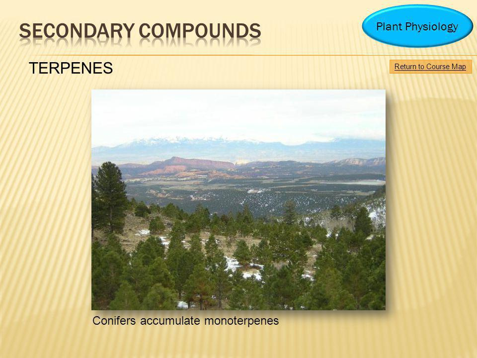 Secondary Compounds TERPENES Plant Physiology