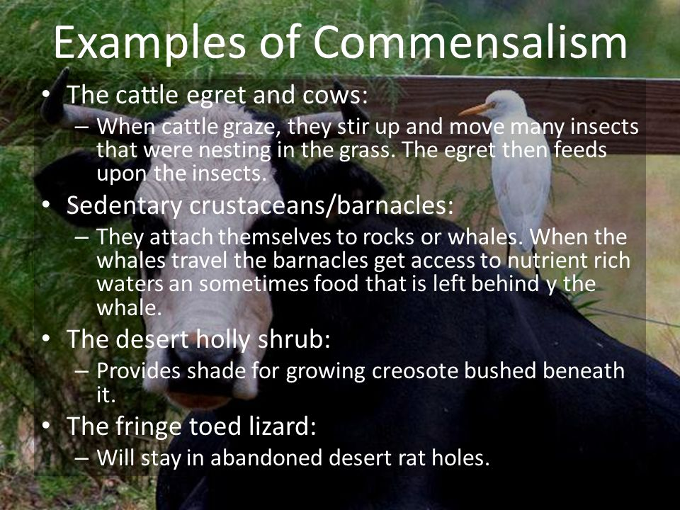 Examples of Commensalism
