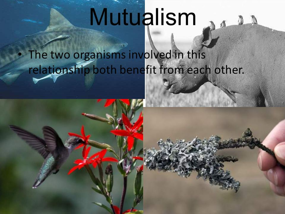 Mutualism The two organisms involved in this relationship both benefit from each other.
