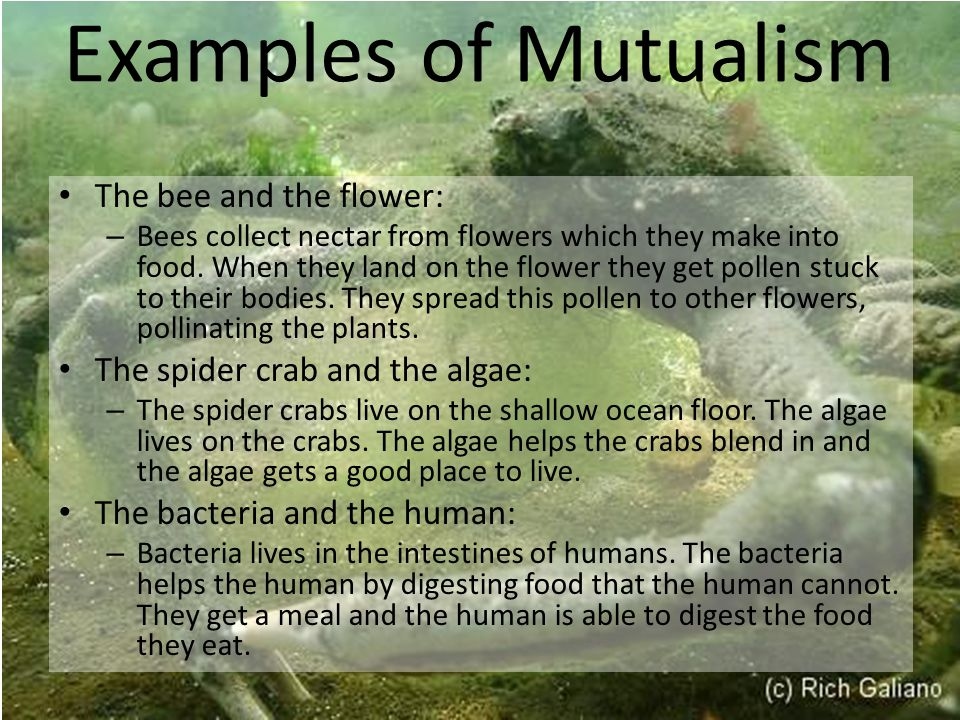 Examples of Mutualism The bee and the flower: