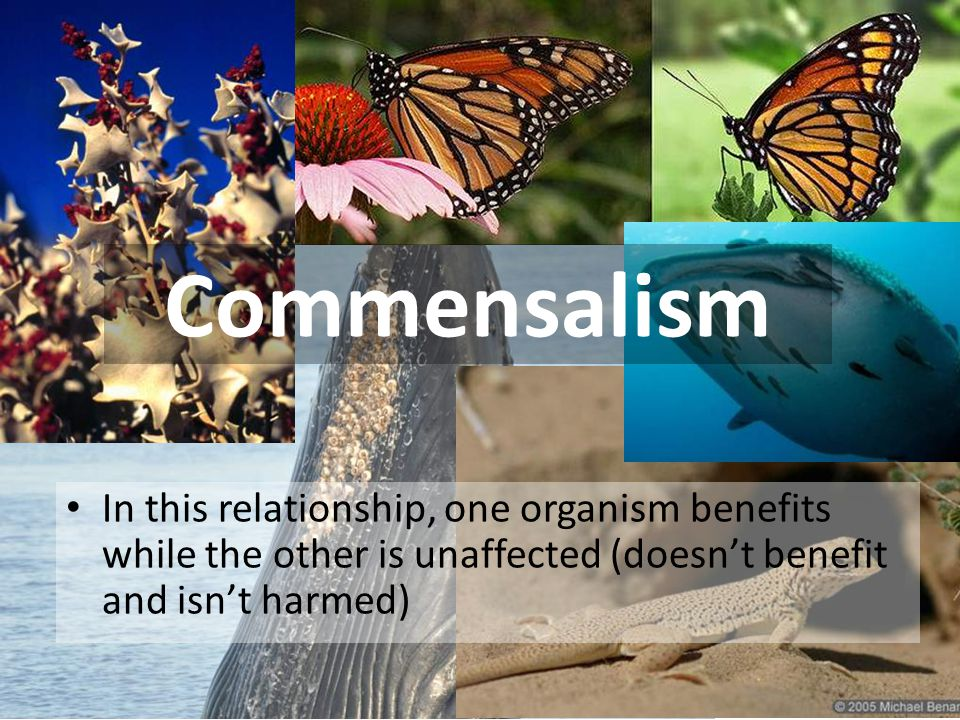 Commensalism http://www.buzzle.com/articles/symbiotic-relationships.html.