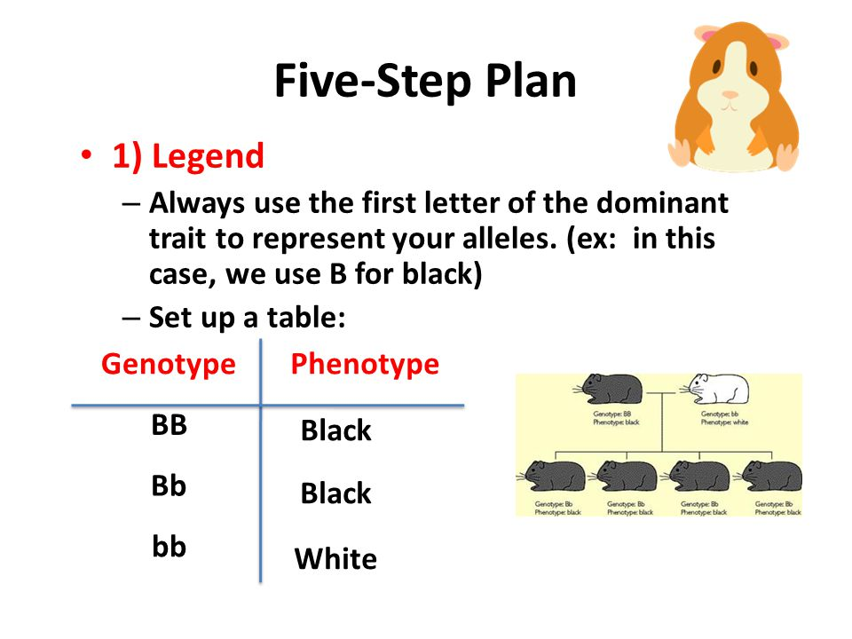 Five-Step Plan 1) Legend