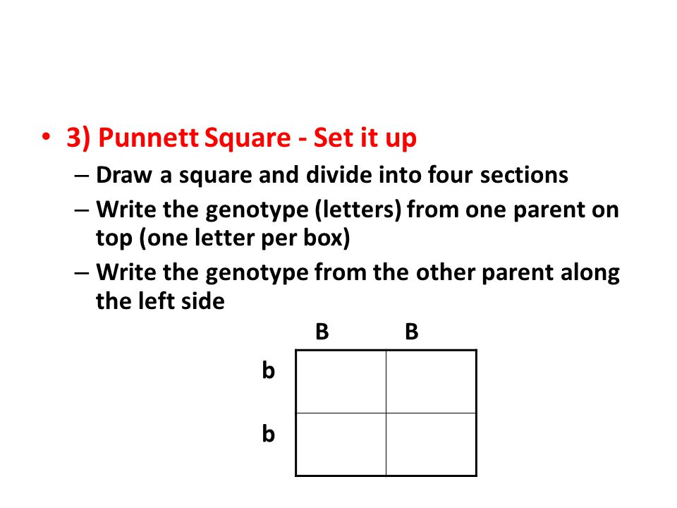 3) Punnett Square - Set it up