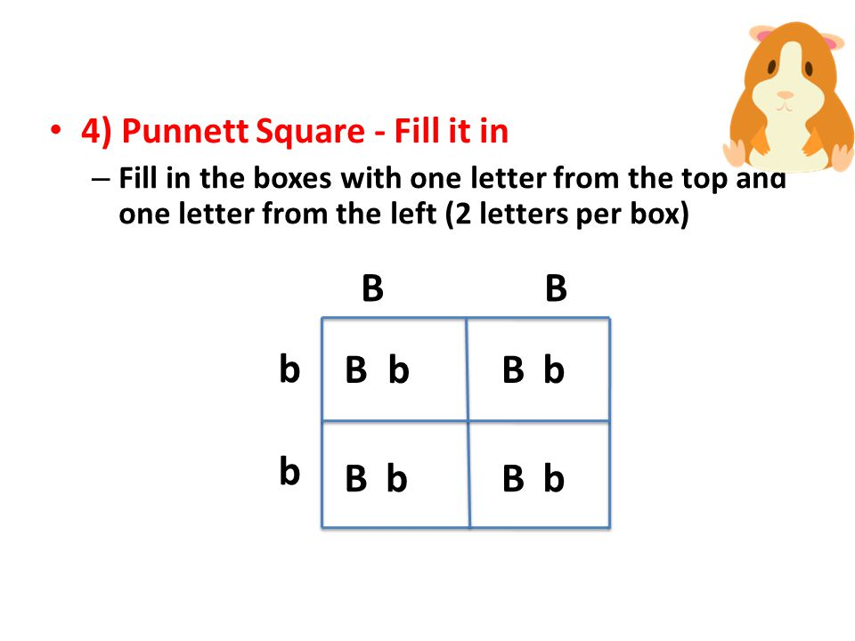 b B b B b B b B b 4) Punnett Square - Fill it in