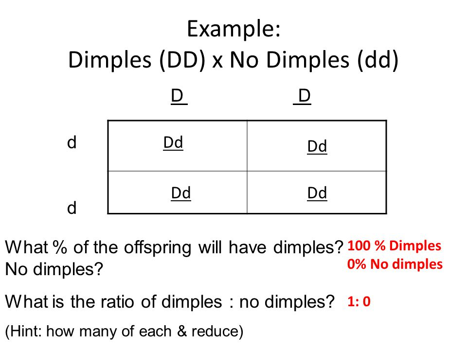 Example: Dimples (DD) x No Dimples (dd)