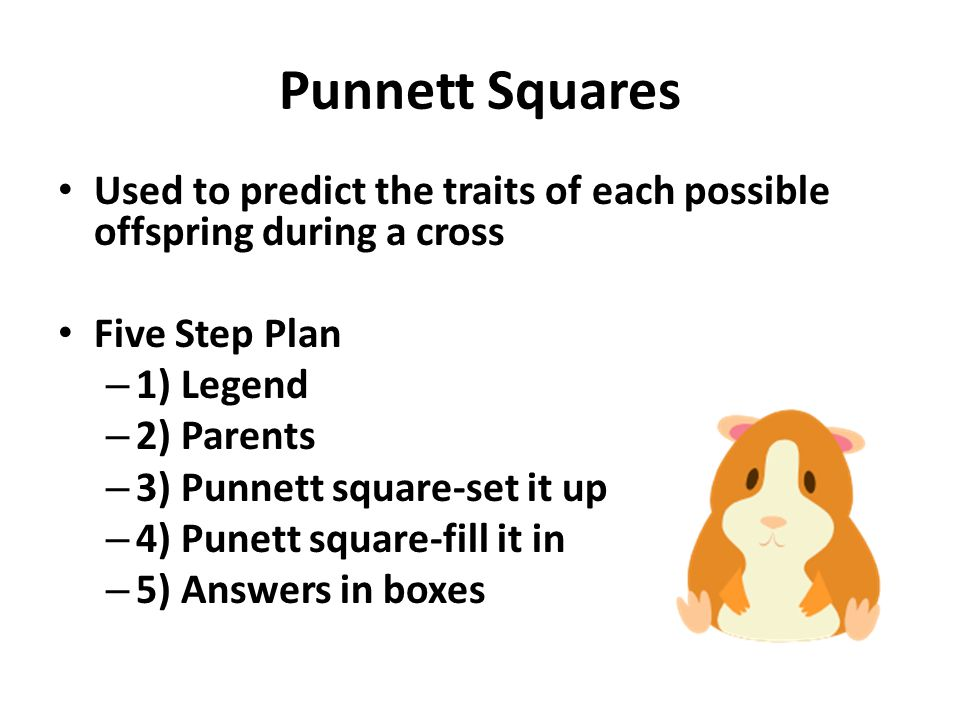Punnett Squares Used to predict the traits of each possible offspring during a cross. Five Step Plan.