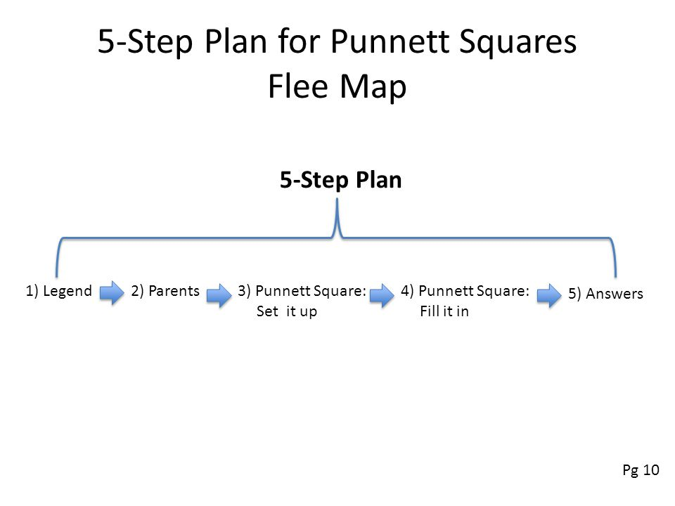 5-Step Plan for Punnett Squares Flee Map