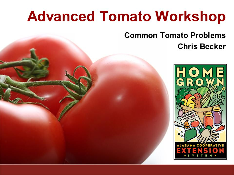Advanced Tomato Workshop