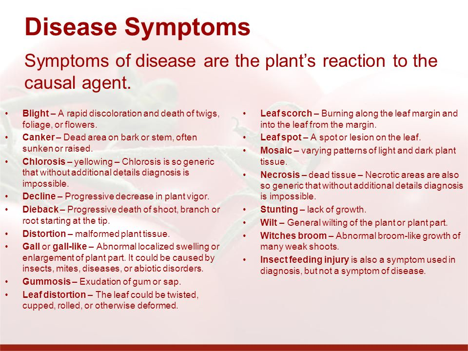 Disease Symptoms Symptoms of disease are the plant's reaction to the causal agent.