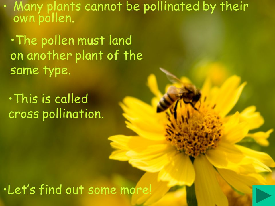 Many plants cannot be pollinated by their own pollen.