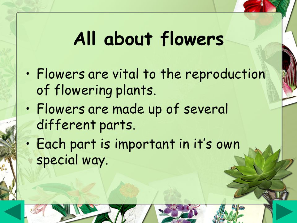 All about flowers Flowers are vital to the reproduction of flowering plants. Flowers are made up of several different parts.