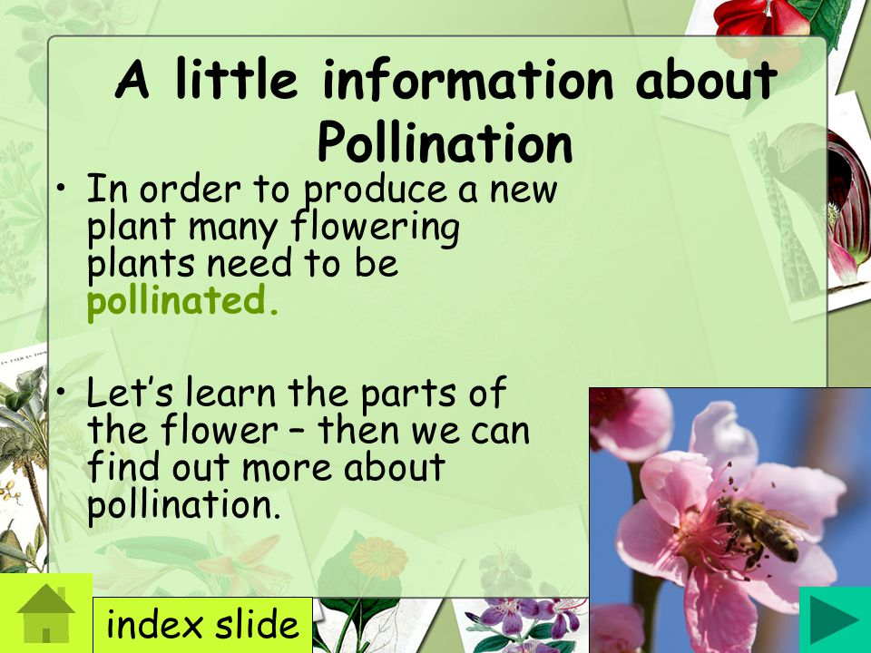 A little information about Pollination
