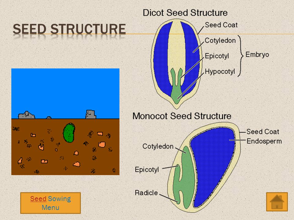 Seed Structure Seed Sowing Menu