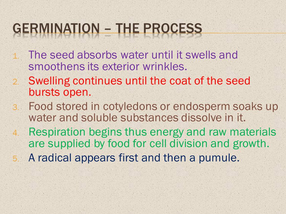 Germination – the process