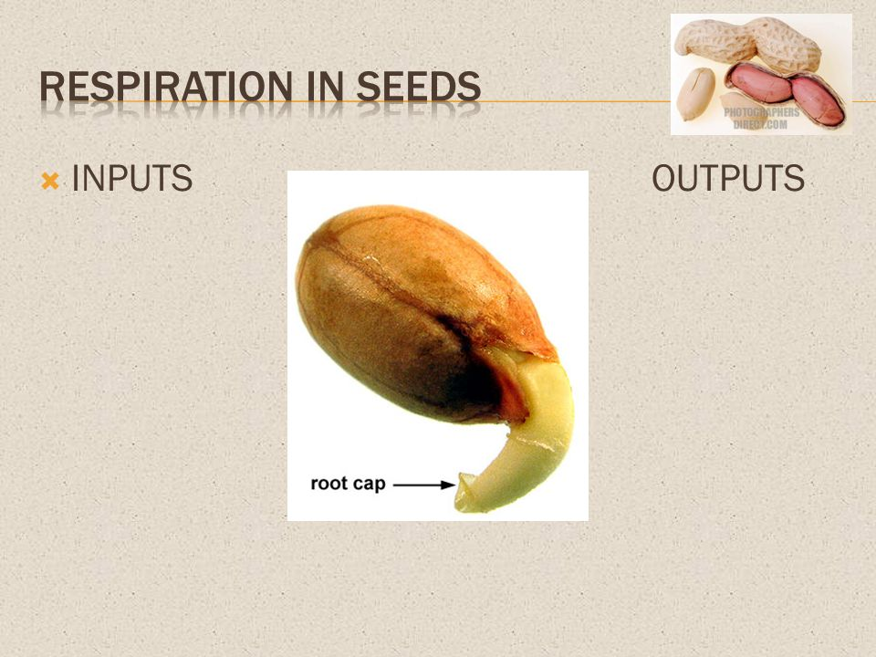 Respiration in seeds INPUTS OUTPUTS