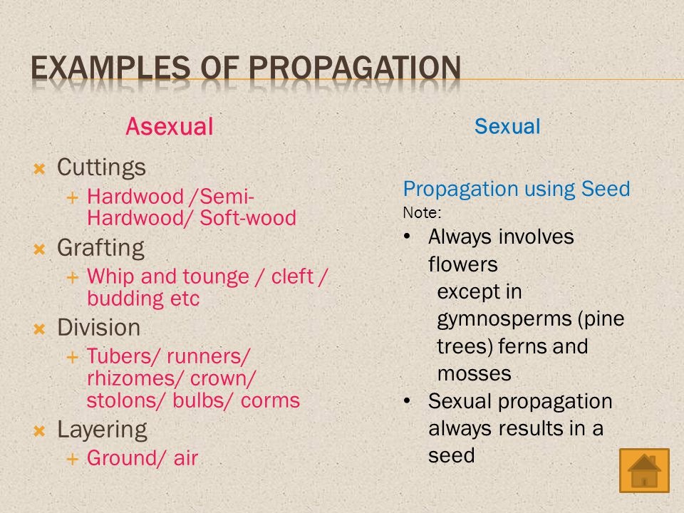 Examples of Propagation
