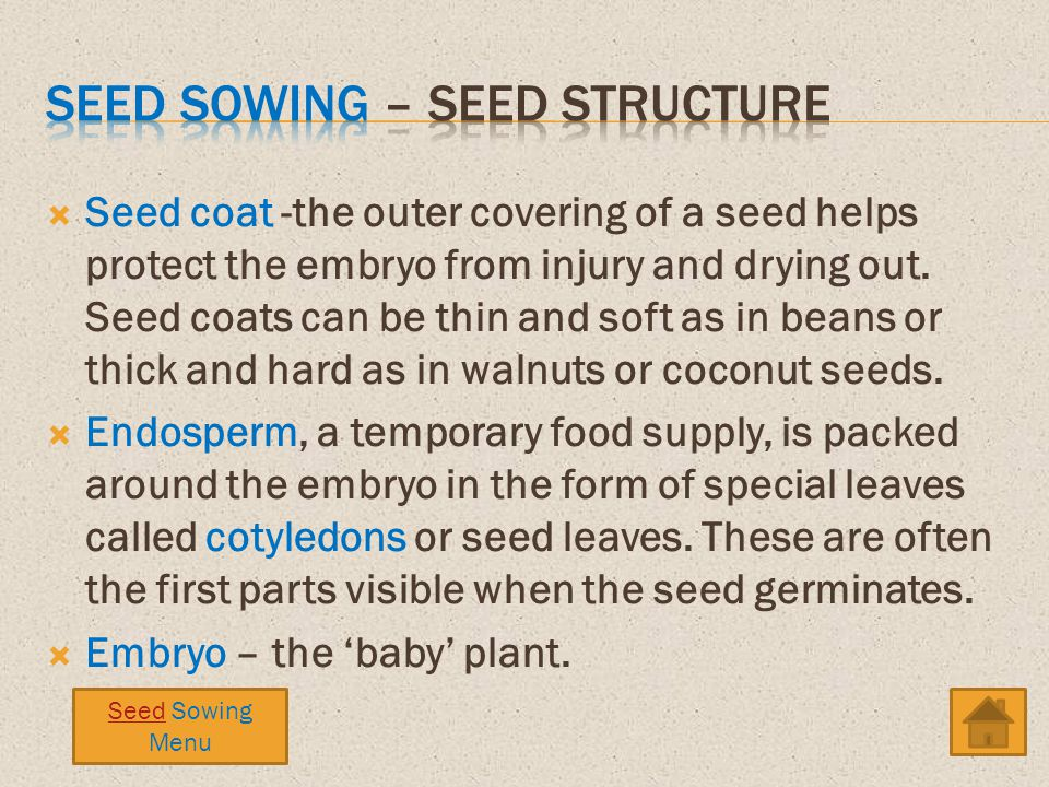 Seed sowing – seed structure