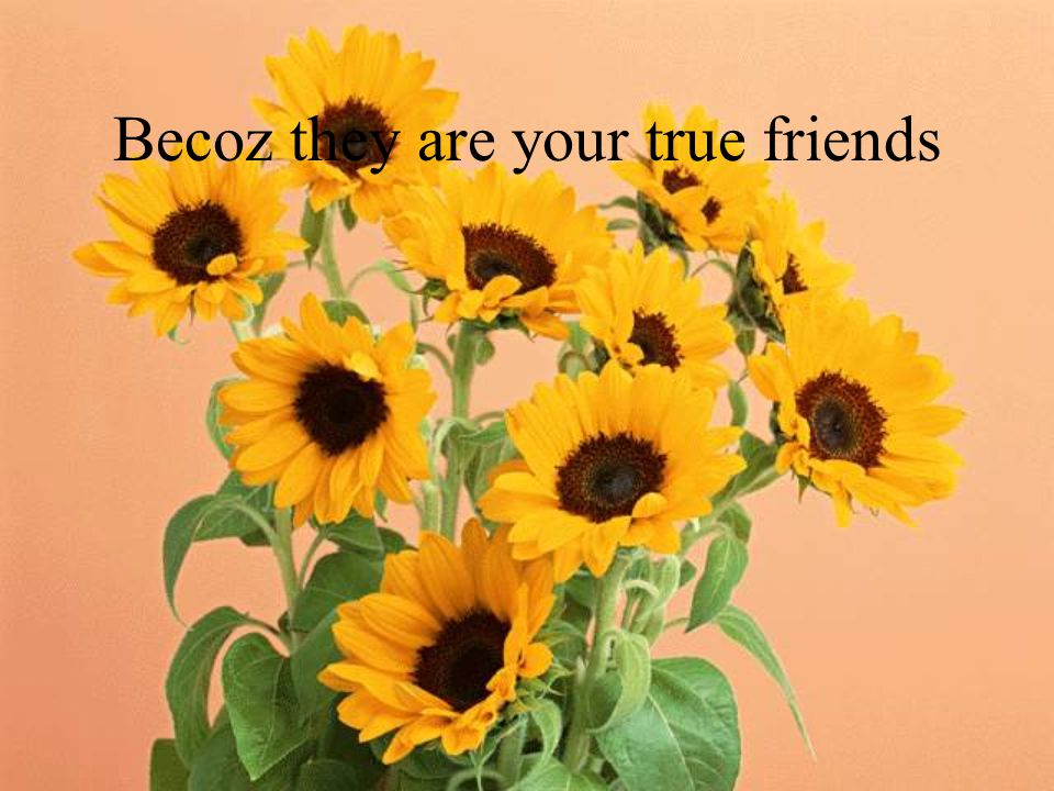 Becoz they are your true friends