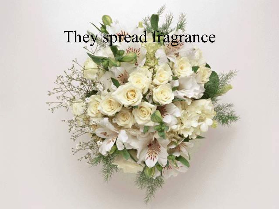 They spread fragrance