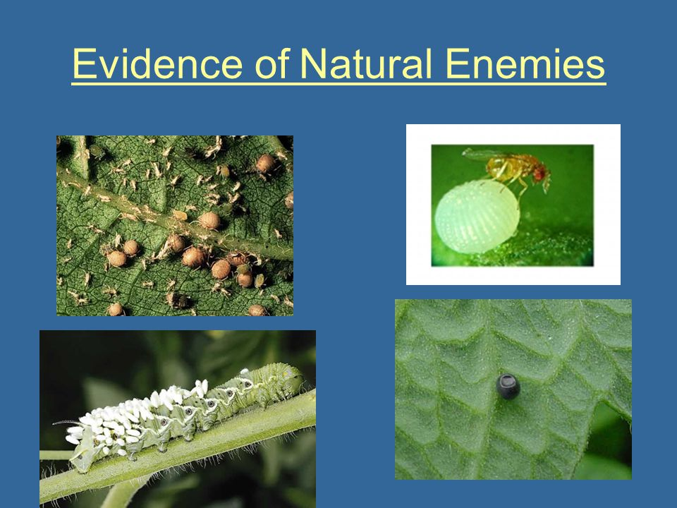 Evidence of Natural Enemies