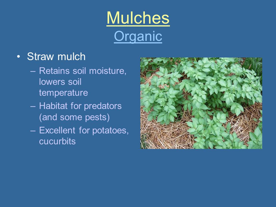 Mulches Organic Straw mulch