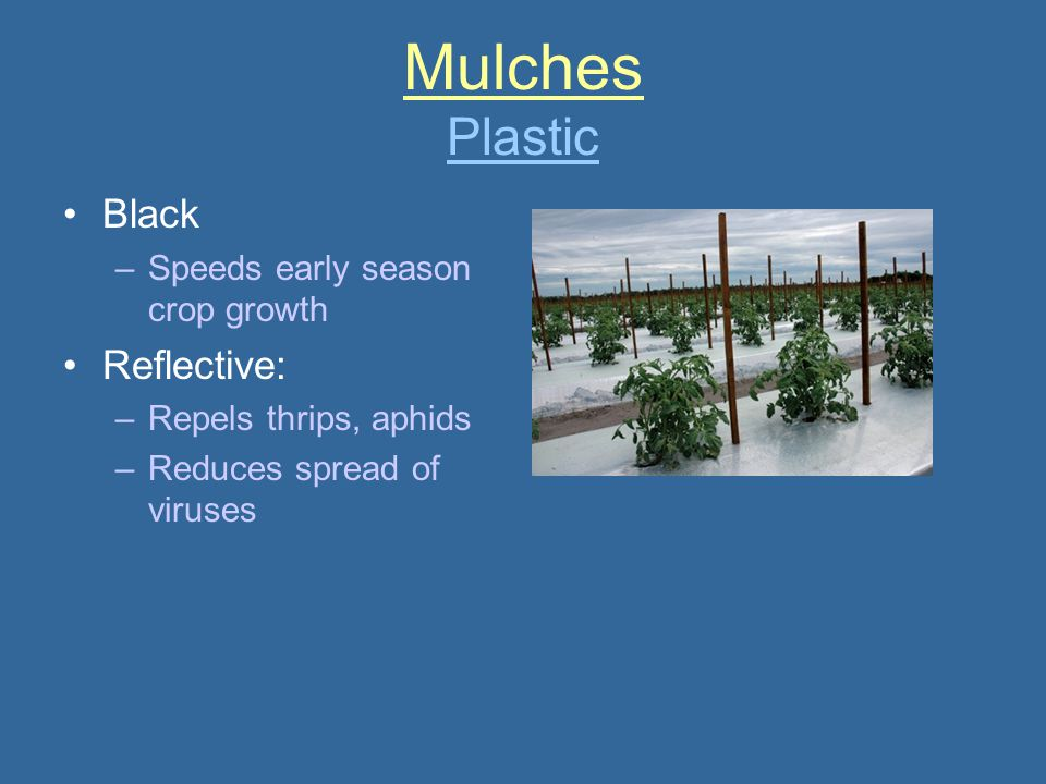 Mulches Plastic Black Reflective: Speeds early season crop growth