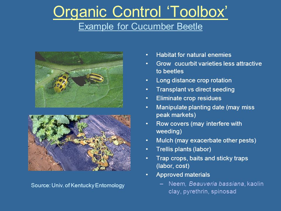 Organic Control 'Toolbox' Example for Cucumber Beetle