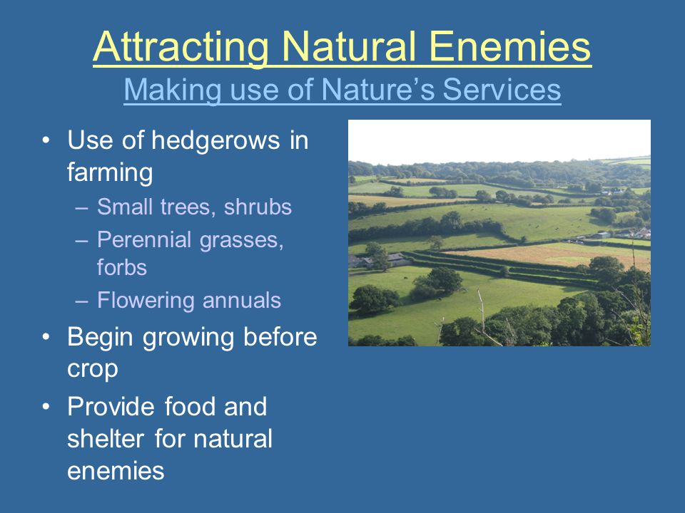 Attracting Natural Enemies Making use of Nature's Services