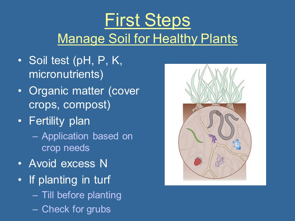First Steps Manage Soil for Healthy Plants